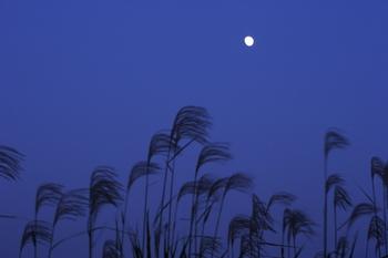 月とすすき.jpg